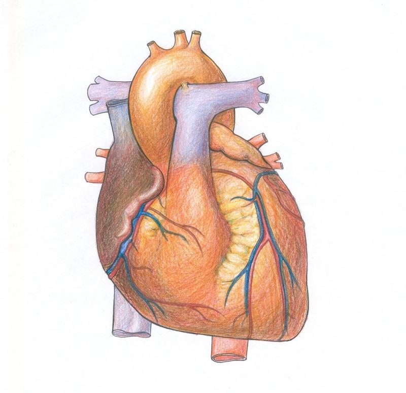 Справи серцеві