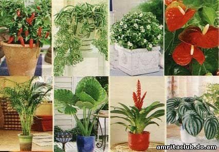 Енергетика рослин